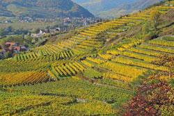 csm_HerbstlicheWeinlandschaftDuernstein__Donau-Niederoesterreich-Michael_Bernleitner_89a2c3b93a